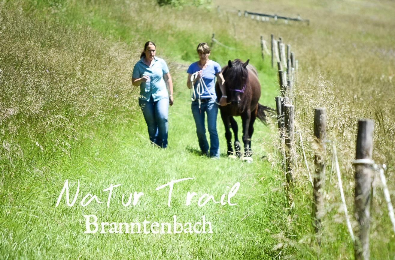 Pferdetraining mit Gefühl, 3237 Brüttelen (BE)