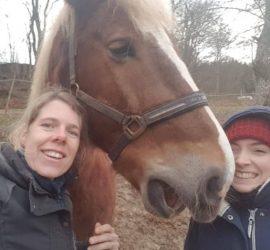 mka-horsemanship