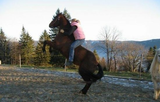 pferde-coaching-bern