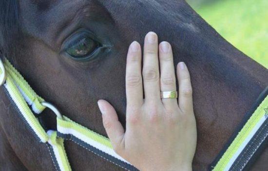 pferde-physiotherapie-st.gallen