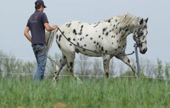 pferdeausbildung-niederösterreich-11