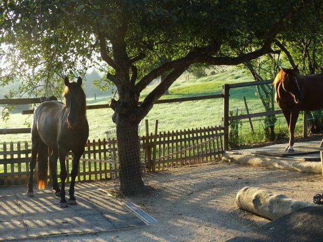 pferdepension-aargau und weitere
