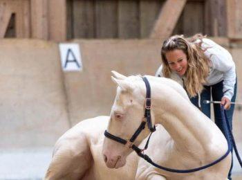 pferdetraining-schweiz