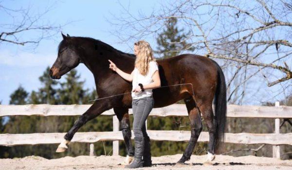 pferdetraining-basel