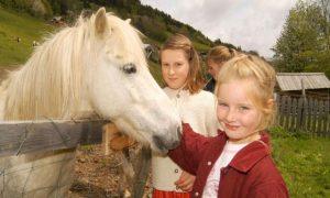 Pony-Alm