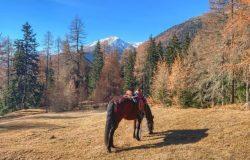 National Riding Salvuns (GR)