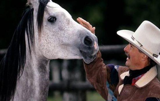 horsemanship-thurgau