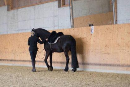 pferdecoaching-zürich