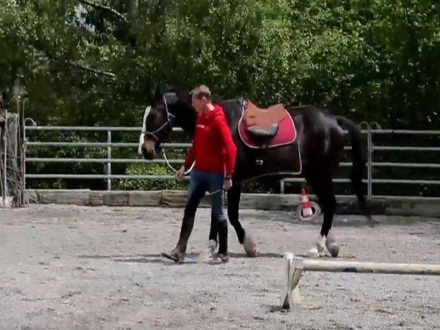 Der mit dem Pferd tanzt, mobil in Zentralschweiz