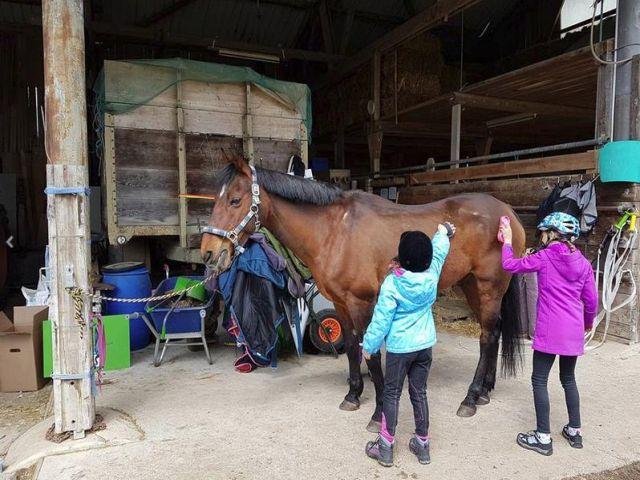 pferde-coaching-zürich