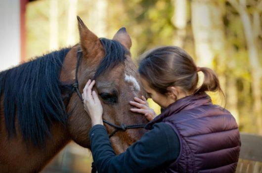 pferde-therapie schweiz