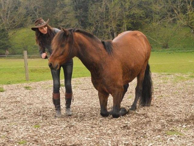 pferdeausbildung-bern-7