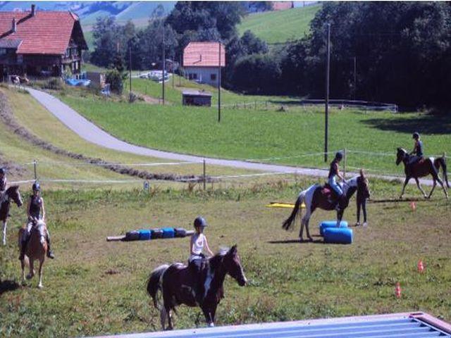 pferdeausbildung-luzern