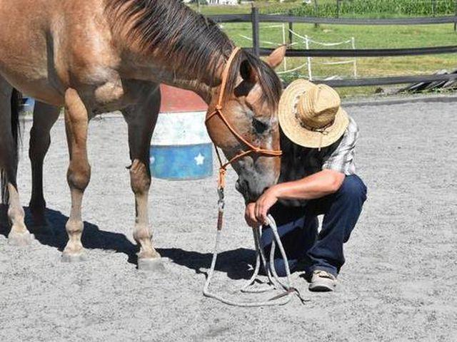 pferdeausbildung-solothurn