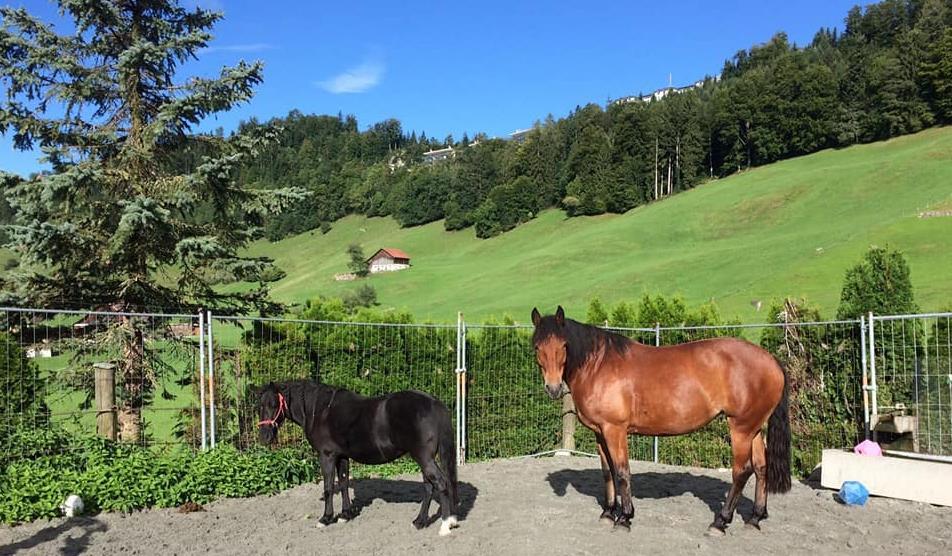 Ponyschule Obbürgen, 6363 Obbürgen (LU)