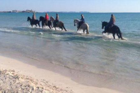 Bio-Finca Can Paulino im Herzen Mallorcas