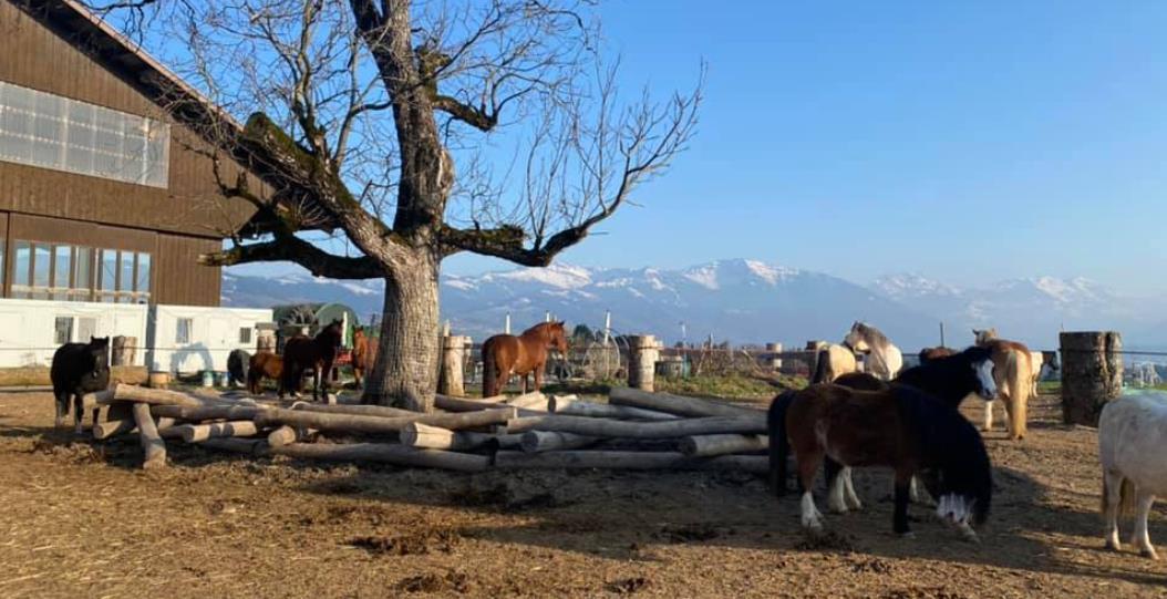Lucy's Pferdepark, 8638 Goldingen (SG)